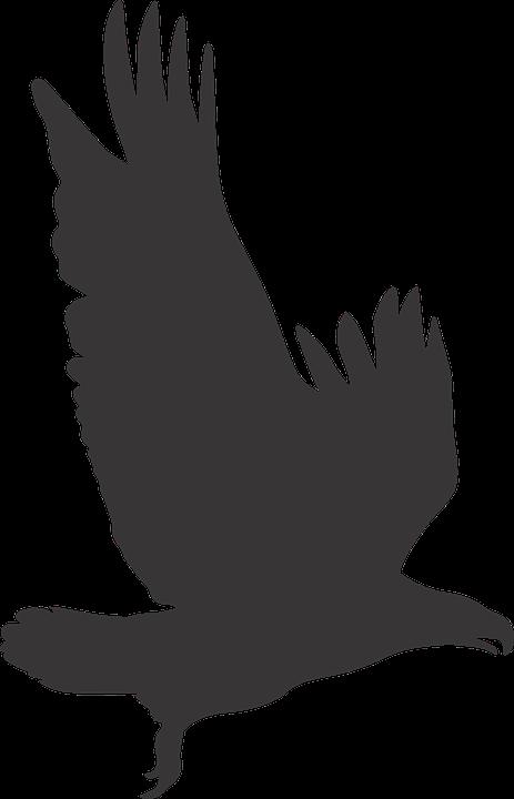 Eagles clipart agila Eagles agila Transparent FREE for