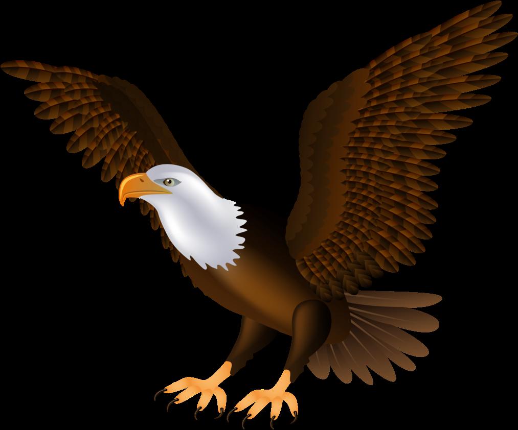 Eagle Png Clip Art 1454 Clipart Of  Transparent