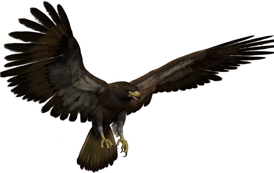 Black Eagle Flying Clipart  Full Size Clipart 3815530