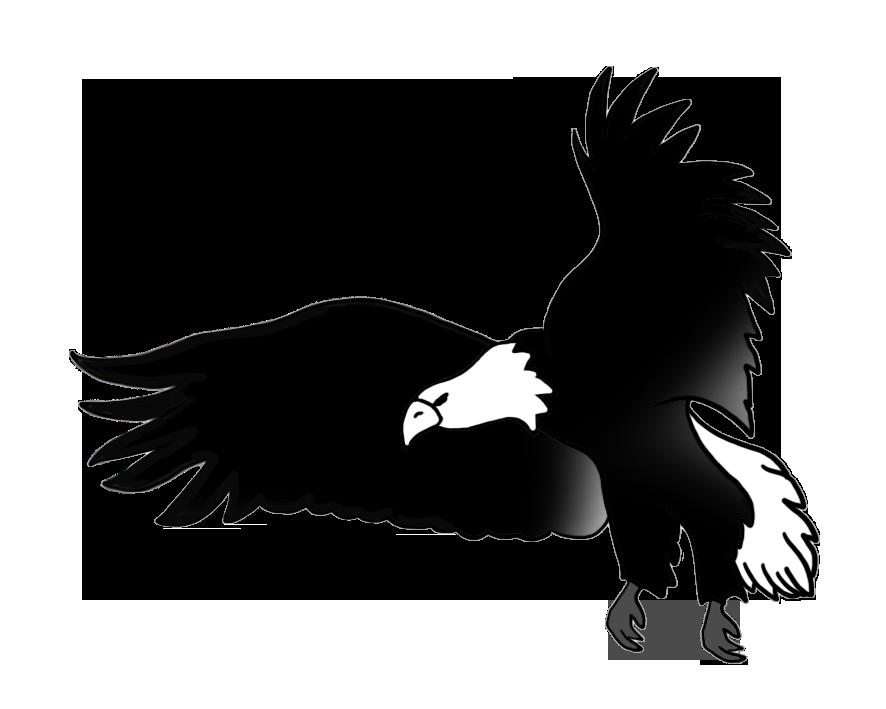 Bald Eagle Drawings