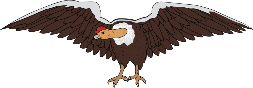 Wing clipart vulture Wing vulture Transparent FREE for