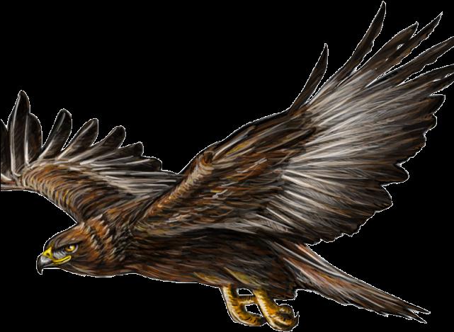 Hawk clipart landing eagle Hawk landing eagle Transparent