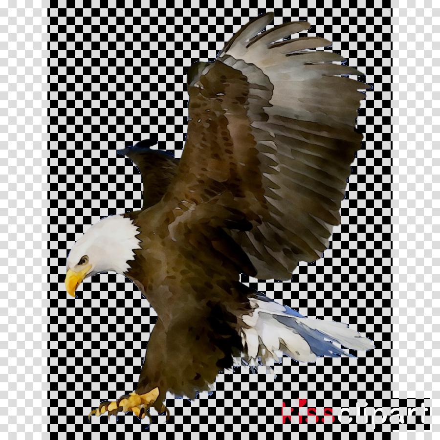 Sea Birds Of Prey