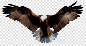 landing eagle clipart 10 free Cliparts | Download images ... - Eagle Landing Clip Art