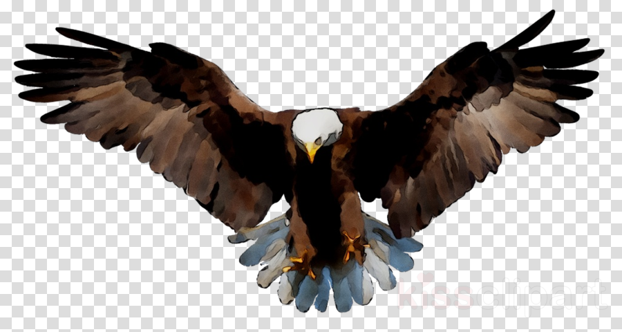 landing eagle clipart 10 free Cliparts  Download images