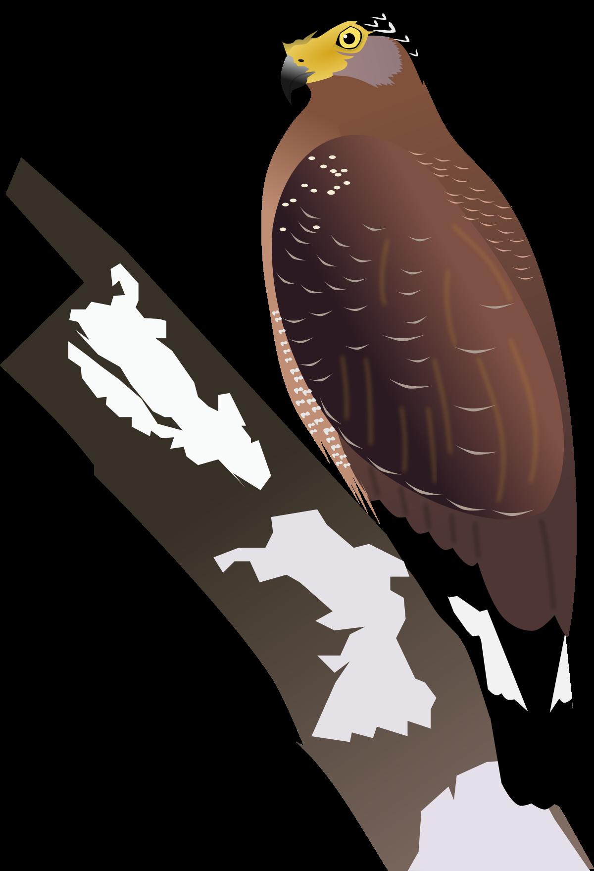 File:Crested Serpent Eagle.svg - Wikipedia - Eagle SVG