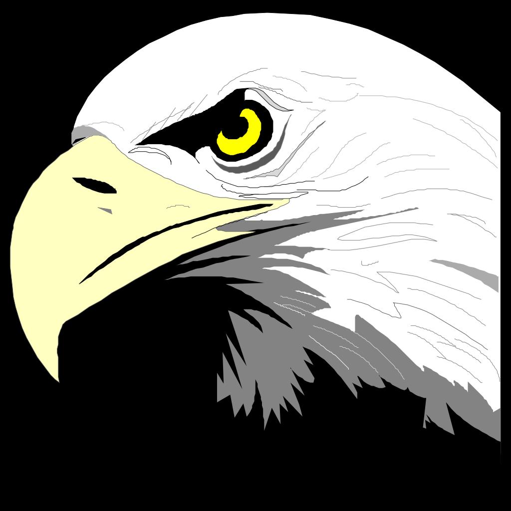 Bald Eagle Head PNG SVG Clip art for Web  Download Clip