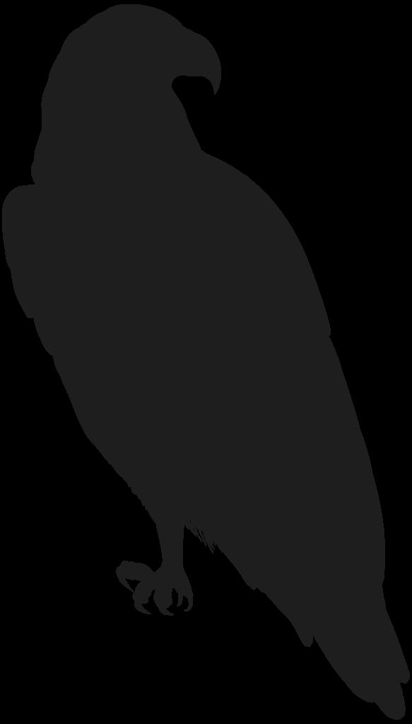 Rose Clip art  Eagle PNG Clip Art Image png download