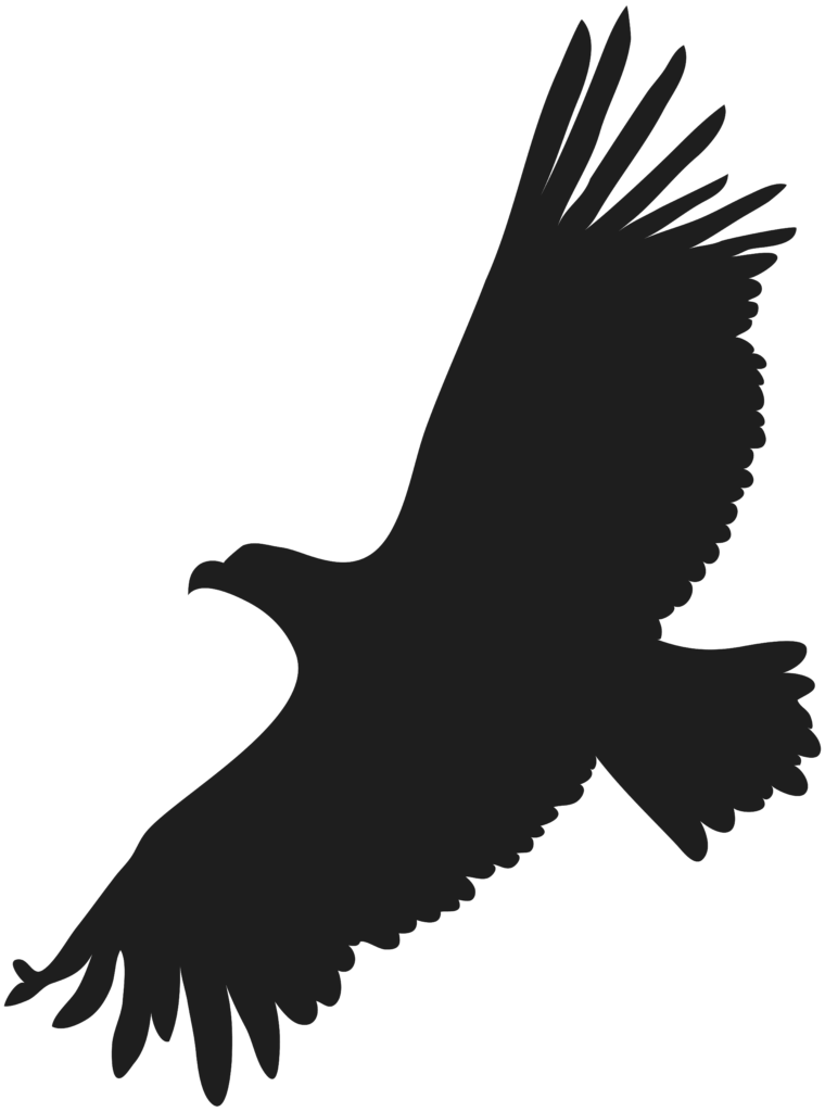 Eagles clipart bird australian Eagles bird australian