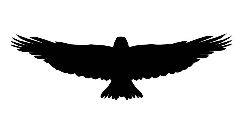 Eagle PNG Transparent Images Pictures Photos  PNG Arts
