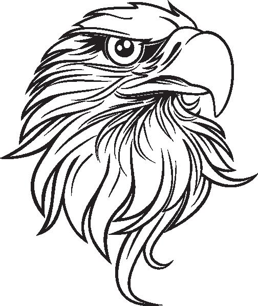 Bald Eagle Drawing Clip art  Eagle Outline Cliparts png