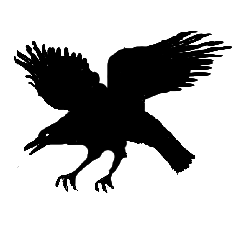 Eagle Silhouette Character Beak  eagle png download  800