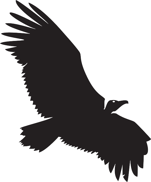 eagle wings  Google Search  Vulture Silhouette free