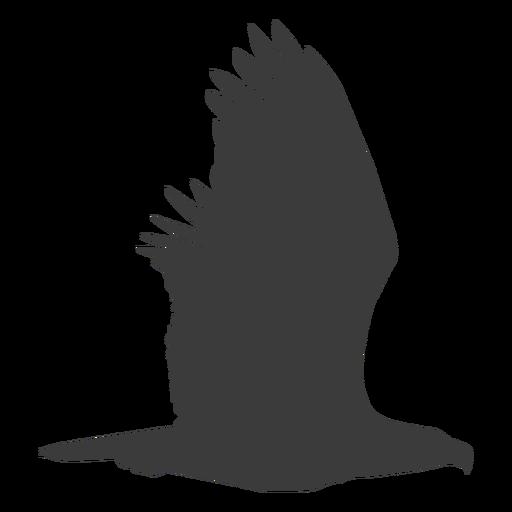 Eagle wing fly flying beak silhouette bird  Transparent
