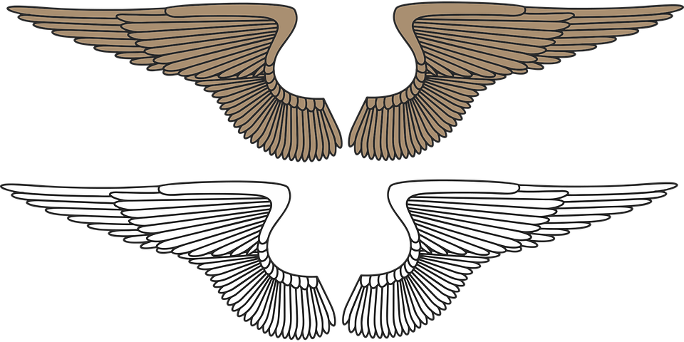 Download Eagle Wings Vector Png  PNG  GIF BASE