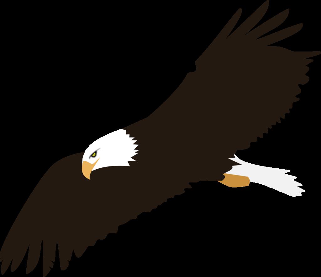 Clipart  Soaring Eagle no background  Eagle Vector