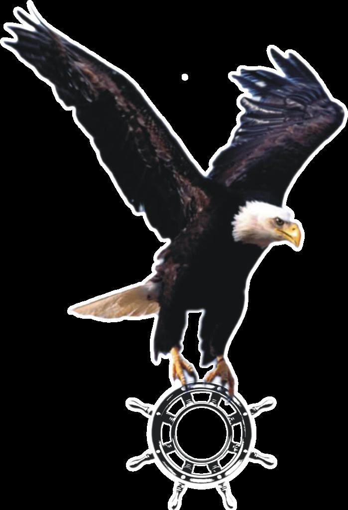 Wallpaper Elang  Flying Eagle Png Clipart  Full Size