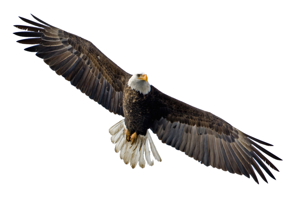 Soaring Eagle Png  Free Soaring Eaglepng Transparent