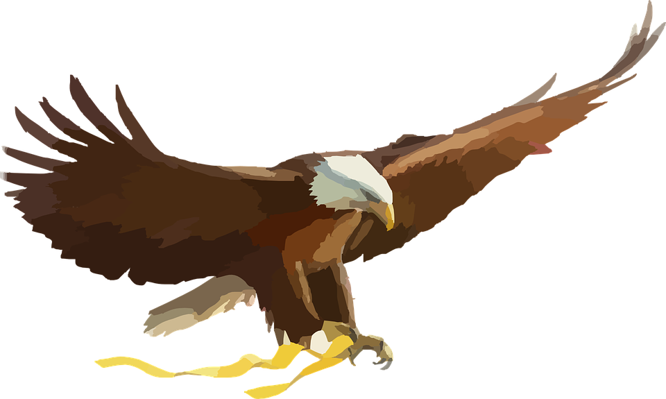 Bald Eagle Bird Of Prey  Free vector graphic on Pixabay