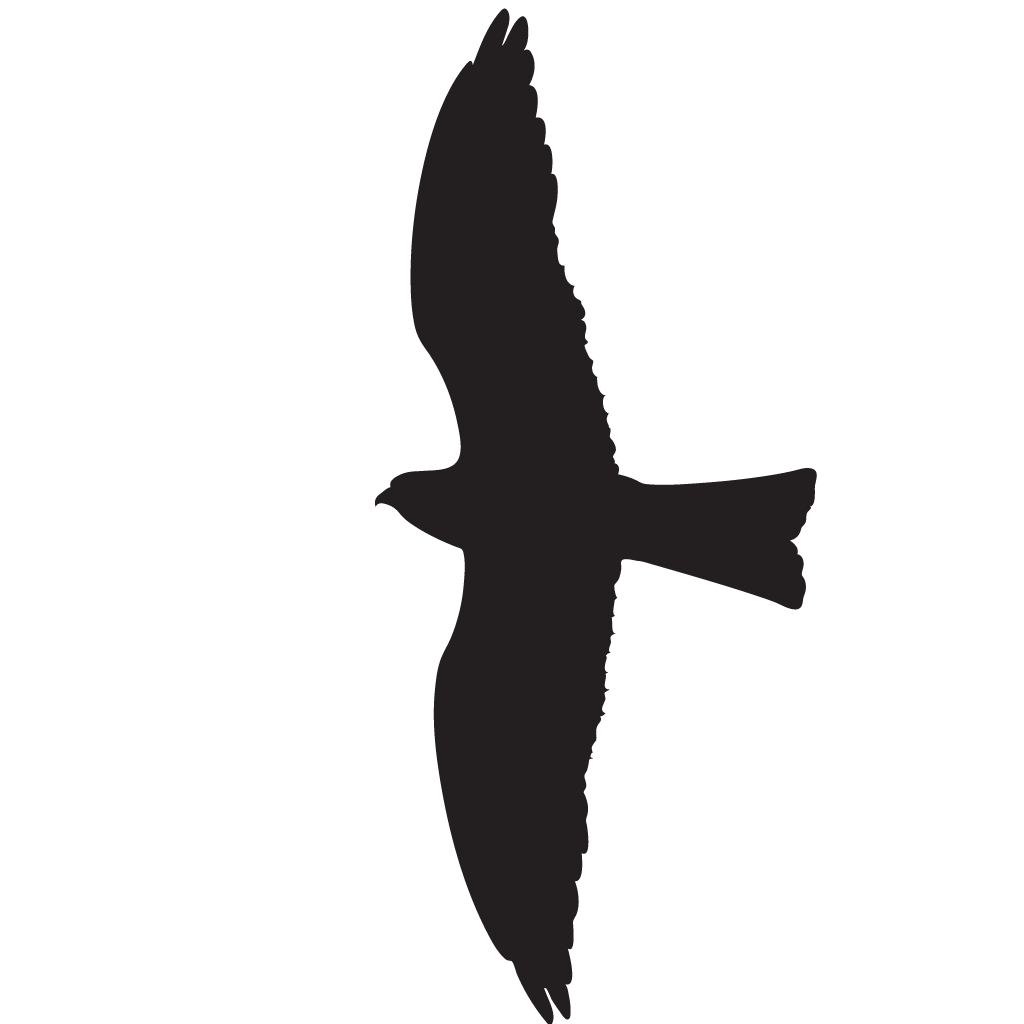 Red Tailed Hawk Silhouette at GetDrawings  Free download