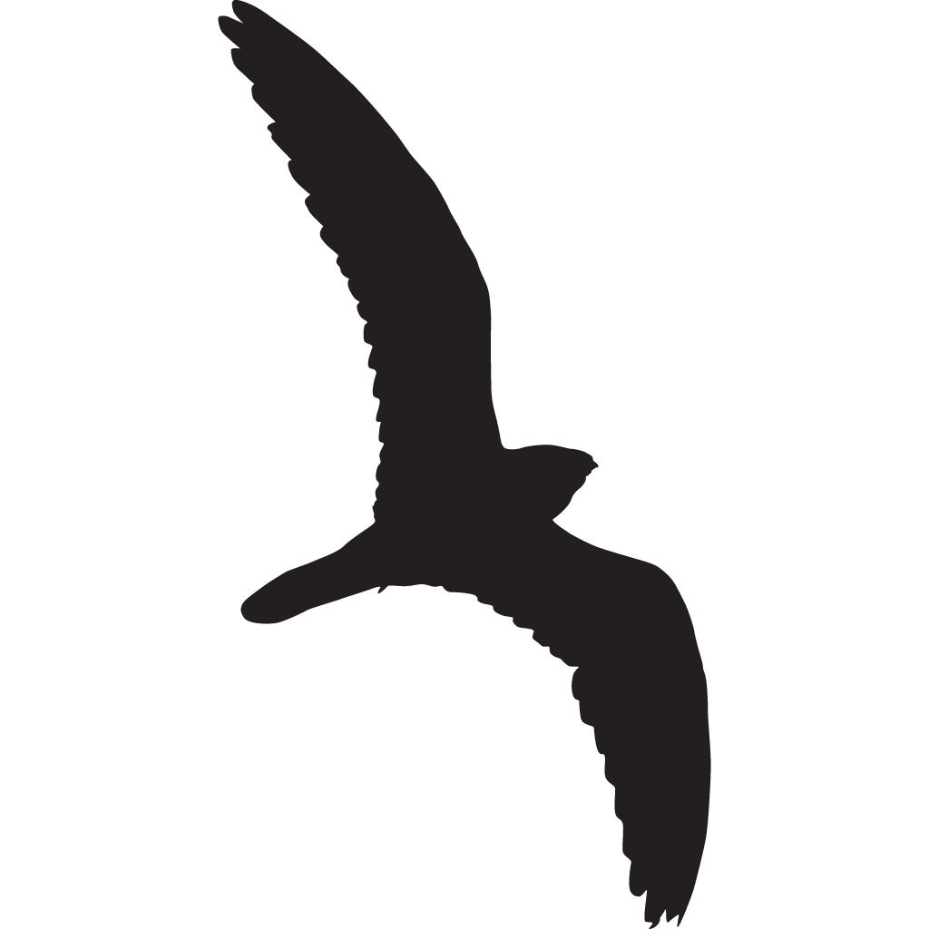 Clipart birds nighthawk Clipart birds nighthawk