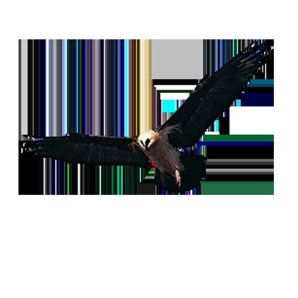 Huishan District Hawk Accipiter Yixing Shenxing Knitting