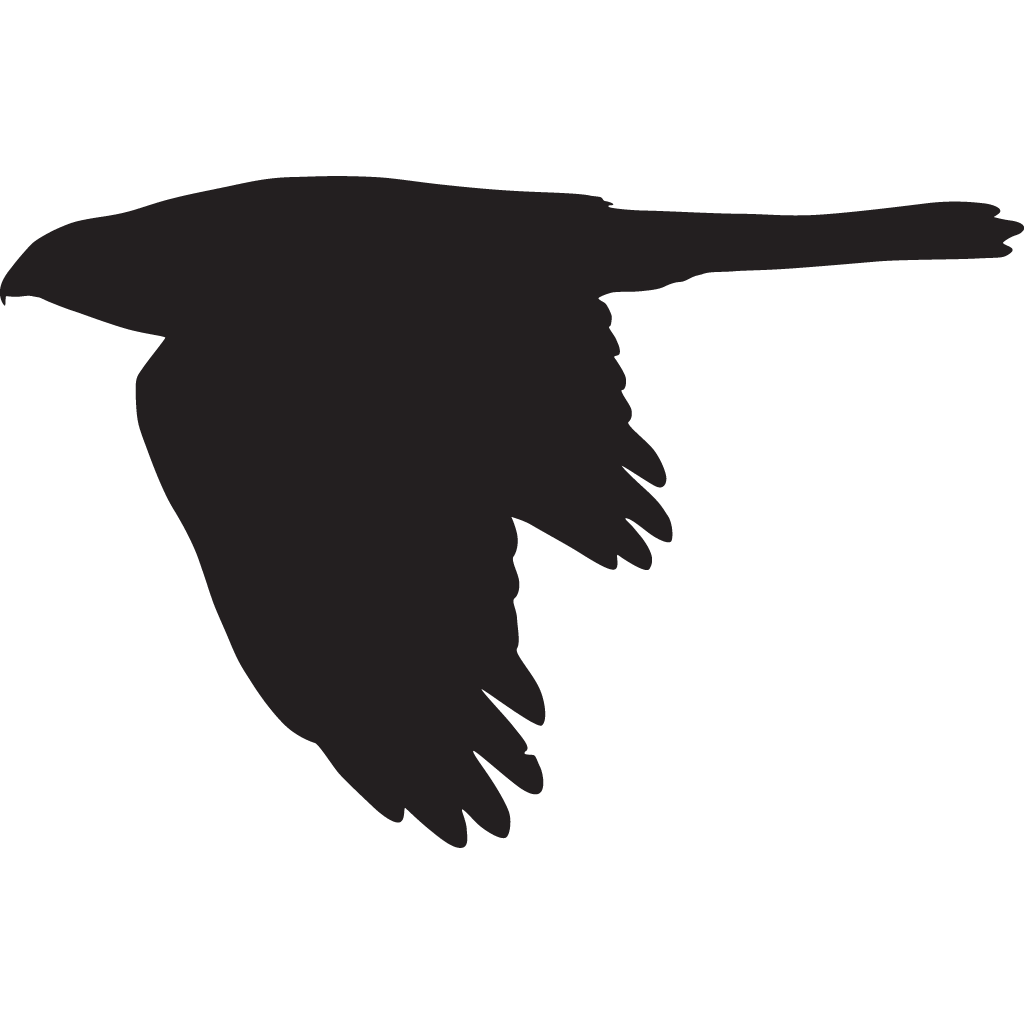 Red Tailed Hawk Silhouette at GetDrawingscom  Free for