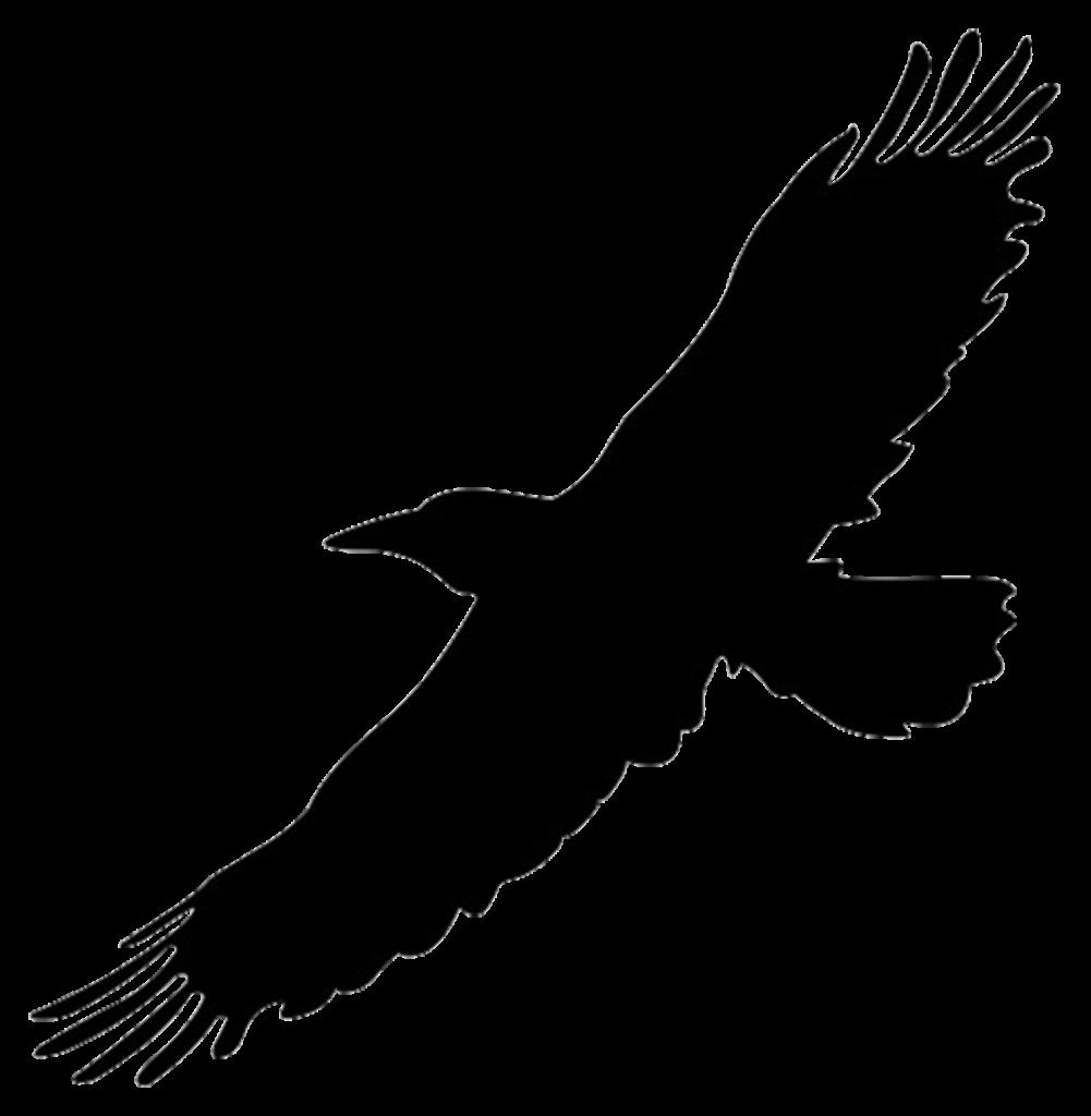Hawk clipart sparrow hawk Hawk sparrow hawk Transparent