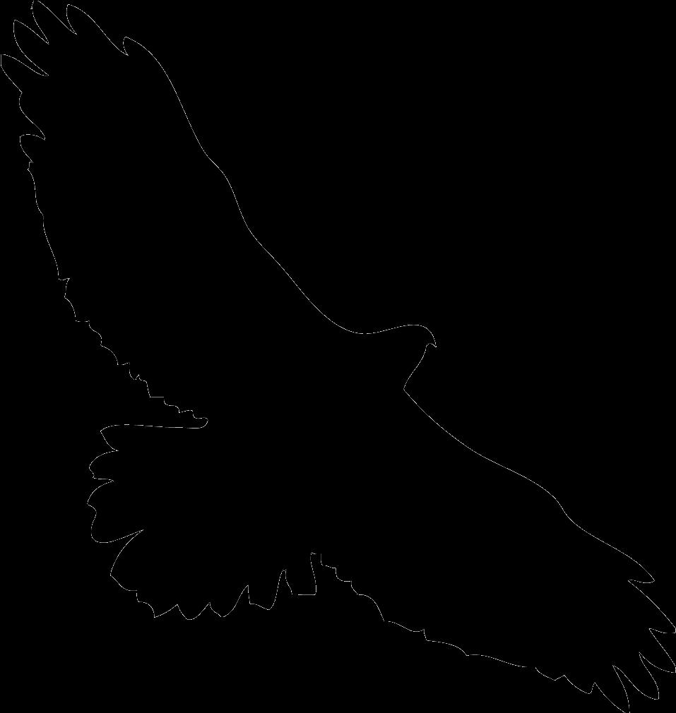 Eagles Clipart Kite Bird  Hawk In Flight Silhouette  Png