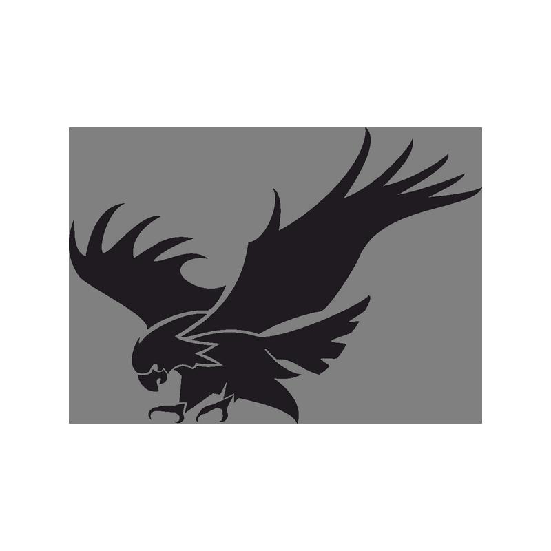 Bald Eagle  eagle png download  800800  Free