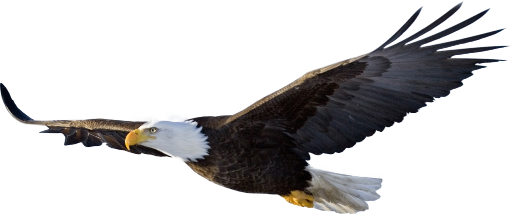 Imgur The most awesome images on the Internet  Eagle in