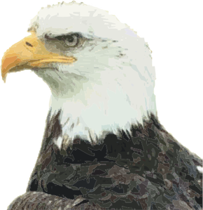 295 free polish eagle vector art  Public domain vectors