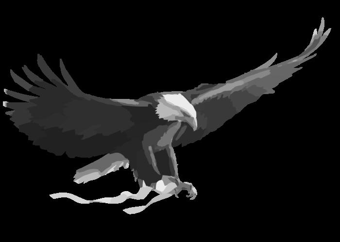 Eagles clipart eagle polish Eagles eagle polish