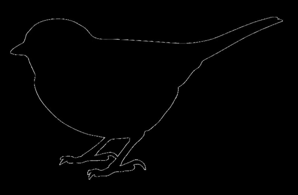 Bird Silhouettes  Bird silhouette Bird drawings