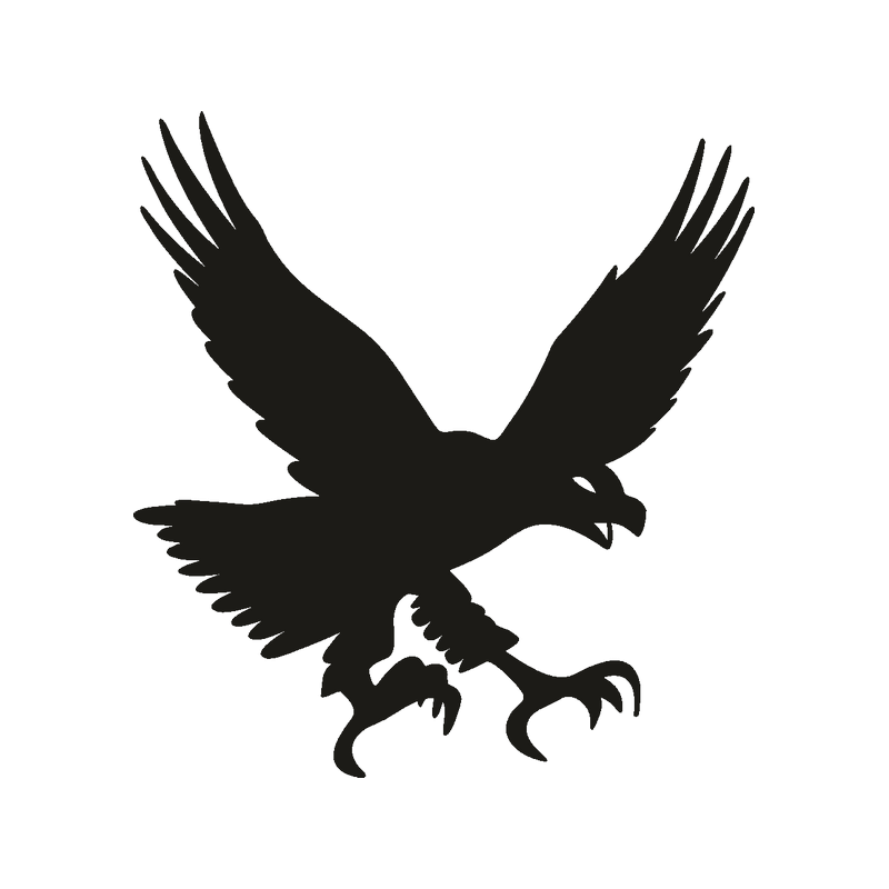 Bald eagle Bird Decal Sticker  eagle png download  800