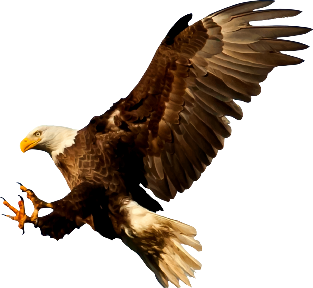 Bald Eagle Bird Silhouette  american eagle png download