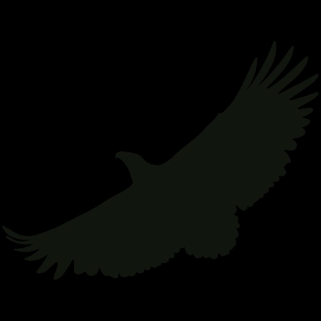 Bald eagle Portable Network Graphics Black and white